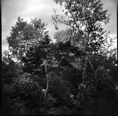cultivated landscape, forest edge, Asheville, North Carolina, Diana F+, Kodak TMAX 400, Ilford Ilfosol 3 developer, 5.15.18 (steve aimone) Tags: landscape cultivatedlandscape forest asheville northcarolina dianaf kodaktmax400 ilfordilfosol3developer 120 film 120film mediumformat lomography monochrome monochromatic blackandwhite