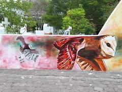 Puerto Ayora (Daniel Putík) Tags: sova owl cemetery wall graffiti street art mural puerto ayora santa cruz galapágy galapagos galápagos