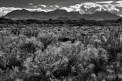 Looking Across the Chihuahuan Desert to Peaks of the Chisos Mountains (Black & White, Big Bend National Park)
