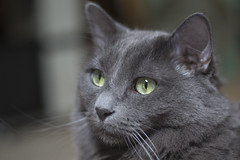 Staring into space  -[ Happy Caturday ]- (Carbon Arc) Tags: happycaturday archive cat feline kitty furball fluffball
