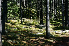 OpalHiills00020 (jahNorr) Tags: summertrip 2012 canadaalbertajaspernationalparkopalhills