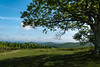 A Tree With A View (riqwammy) Tags: hike hiking trail path grass mountains trees tree forest pasture field sky clouds blue green nature natural nikon d750 landscape blueridgeparkway brp rockyknob outside outdoors recreation walk shade shadow leaves