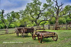 Wagons on the Lyndon B. Johnson farm (garofano_richard) Tags: trees wagons oldfences ironwheels grass skyline deadtreelimbs oldboards deadtree oldwoodengate