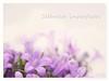 Imperfect silences (c.ferrol) Tags: lilas azules malvas petalos suaves pastel flores imperfecto silencio bokeh