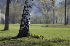 when spring comes to town (Sergey S Ponomarev) Tags: canon eos travel tourism spring paysage paesaggio lanschaft bokeh germany primavera aprile april 70d europe пейзаж европа германия весна апрель sergeysponomarev сергейпономарев