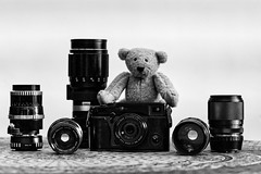 Teddy (Jacques Romeyer dherbey) Tags: teddy beat bw blackandwhite noiretblanc