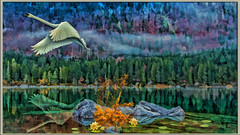 grace (sw2018) Tags: lake water lilly swan rock flight mist art texture trees forest