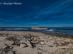 Pacific Seascape - Pacific Grove (moelynphotos) Tags: beach seascape sand rock driftwood surf montereybay pacificocean rockformation watersedge dramaticsky bird beautyinnature nopeople pacificgrove california moelynphotos