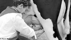 Milking (patrick_milan) Tags: plouguin saint renan ploudalmezeau cow milk lait traite vache portrait woman rochesurforon