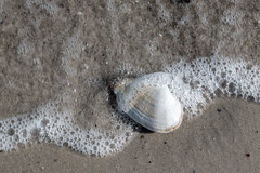 20180407-IMG_9408 (dr_knox) Tags: objekt ort fa muschel ostsee sand strand wasser welle