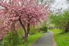 Inviting Path (JMS2) Tags: spring cherryblossoms path bench park scenic landscape pink
