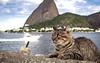 Flamengo - Rio - 09 05 18 (lipematos05) Tags: flamengo aterro botafogo praia gatos cats pão de açucar rio pedra rocha p900 guanabara baía nikon nikonp900