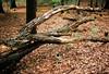 2 (kotmariusz) Tags: woods las forest tree fallen decay olumpus poland 35mm filmphotography analognature nature color polska drzewa drzewo fujifilm