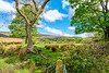 Back among the Fells (Peter Leigh50) Tags: fujifilm fuji xt2 lancashire landscape landschaft trees fells hills field farmland farm gate grass green sky clouds hedge