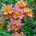 Azalea Bouquet