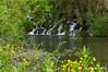 Río Sedanillo (Fernando Sanz Zazo) Tags: merindades cascadas burgos
