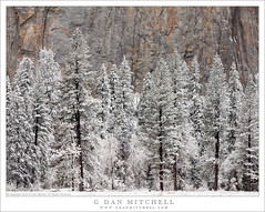 Snow-Covered Trees, Cliff (G Dan Mitchell) Tags: sentinel rocks elcapitan meadow trees conifer snow covered spring storm yosemite valley national park sierra nevada landscape nature california usa north america