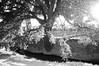 Complicado (Lograi) Tags: manresa barcelona cataluña catalunya catalonia españa espanya spain árbol tree bw blancoynegro byn blackandwhite blackwhite bn geoetiquetada geotagged