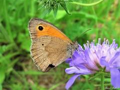 Butterfly 1674 (+1200000 views!) Tags: butterfly borboleta farfalla mariposa papillon schmetterling فراشة