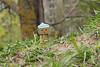 spring days (olgabrezhneva) Tags: danboard amazon japan toys danbo revoltech minifigure toy plastic figure figurine minifigurine figures dollphotographer dollphotography toypics toyphotographer miniature danboo animal