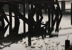 Where I hang out (Flick'gAbility) Tags: urban ducks pilings water silhouette islaiscreek sanfrancisco canoneos5dmarkiv canonef135mmf2lusm