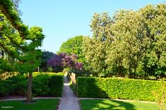 Dutch Nature (JaapCom) Tags: jaapcom natural naturel trees flowers fleurs flowering green wezep soppe dutchnetherlands holland pad lentetime lente