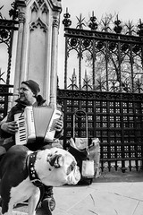 Houses of Parliament gates, London (that Geoff...) Tags: london england busker parliamentsquare gates housesofparliament parliament streetphotography musician dog accordianplayer talented united kingdom gb uk tourism animals