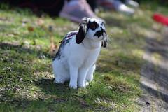 DSC_0150 (klawerjanina) Tags: bunnyjump bunny kani kanin kanihoppning kaniestekisat