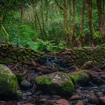 Bosque del Cedro thumbnail