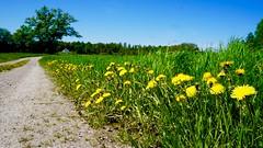 Landscape / landskap (shemring) Tags: fs180520 fotosondag fotosöndag landskap