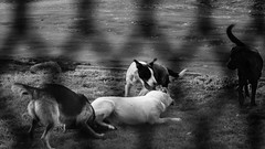 Tuesday morning in bnw (maxineculman) Tags: black white bnw street photography shadows landscape scene people dogs gate sky clouds