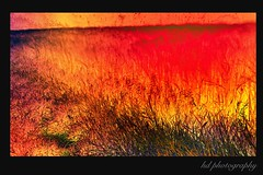 bush fire (horstdoehler) Tags: bush fire heat colored