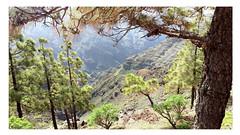 Berg / Mountain (Sam H. Maas) Tags: berg mountain baum tree totale natur nature lagomera outdoor ausen landscape landschaft