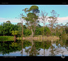 Mirror World XVI (tomraven) Tags: reflection water bush trees sky ferntree eastcape tomraven green pond lake aravenimage q22018 olympus penf