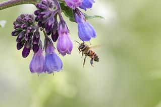 bee-uty in flight