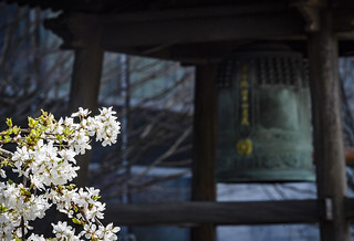 Peace Bell and Cherry Blossom