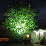 Lighted Tree thumbnail