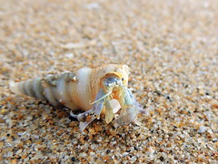 Crustacean (markb120) Tags: crustacean shellfishanimal beast brute nature kind grain