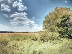 AvalonMarshesNo13 - Copy (iankellybn26dj) Tags: uk england dorset glastonbury nature natural landscape wetland sky spring photo hdr avalon marsh marshes clouds