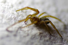 Buscando la Luz (Roberto Segura) Tags: spider macro closeup costarica pentax pentaxart pentaxlife ks2