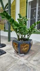 2018-04-26_09-05-54 (Kaemattson) Tags: theernesthemingwayhomeandmuseum hemingway house key west florida keys tropical garden blue gold pot