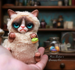 You donut (pure_embers) Tags: pure embers laura uk pureembers photography kitty teddy grumpy cat art doll cute adorable donuts rioky studio