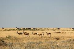 IMG_2271 (tregnier) Tags: namibia roadtrip africa travel desert animals sossusvlei leopard cheetah lion solitaire trip