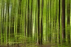spring awakening (renatecamin) Tags: green forest trees spring grün frühling abstract nature