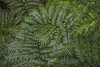 Into The Green (dietmar-schwanitz) Tags: göttingen niedersachsen lowersaxony deutschland germany botanischergarten alterbotanischergarten botanicalgarden oldbotanicalgarden farnhaus fernhouse gewächshaus greenhouse farn fern pflanzen plants natur nature grün green farbe color greenisbeautiful grüntöne lightroom nikond750 nikonafsnikkor24120mmf40ged nikcollection colorefex dietmarschwanitz