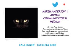How To Communicate With Animals & Medium, Karen Anderson (An Introduction to Animal Communication) Tags: animalcommunication petpsychic animalpsychic spiritanimal spiritanimals karenanderson petloss deceasedpets grief paranormal psychic animalcommunicationclasses animalcommunicationcourses learnanimalcommunication howtocommunicatewithanimals animalcommunicationtips telepathicanimalcommunication