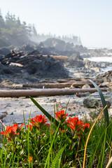 Coast! (Jason Pineau) Tags: nootka island coast vancouver pacific hiking backpacking camping bc britishcolumbia indian paintbrush flowers grass