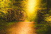 Magical forest (JBA-77) Tags: forest trees bushes color tones yellow green light sun summer fairytale magic magical enchanted beautiful beauty