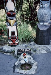 Dog Bar (Rusty Russ) Tags: dog bar owl bird water drink real picture colorful day digital window flickr country bright happy colour eos scenic america world sunset beach sky red nature blue white tree green art light sun cloud park landscape summer city yellow people old new photoshop google bing yahoo stumbleupon getty national geographic creative composite manipulation hue pinterest blog twitter comons wiki pixel artistic topaz filter on1 sunshine image reddit tinder