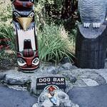 Dog Bar thumbnail